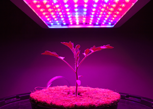 Mouser's New Horticulture Applications Site Shines Light  on LEDs, Sensors, IoT in Plant Growing Operations